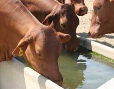 Livestock & Domestic Water