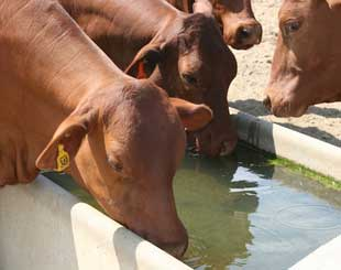 Livestock & Domestic Water